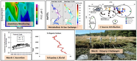 Sample data being collected in the Aquatic/Estuarine and Coastal Wetlands modules in support of carbon mass balancing and estuarine carbon simulation model validation.