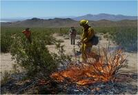 Altered Fire Regimes and Non-Native Invasive Plants